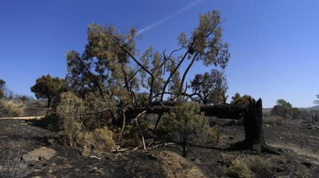robledo-incendio-forestal--644x362